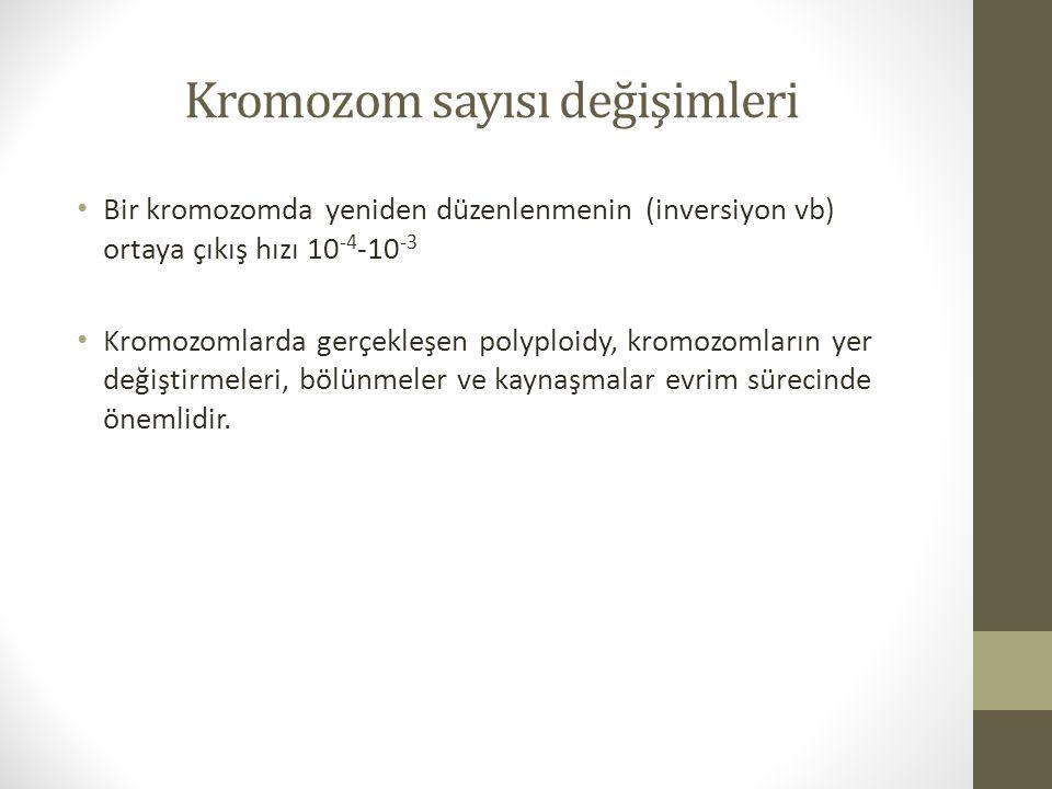 Kromozom sayısı değişimleri Bir kromozomda yeniden düzenlenmenin (inversiyon vb) ortaya çıkış hızı 10 -4 -10 -3 Kromozomlarda gerçekleşen polyploidy,