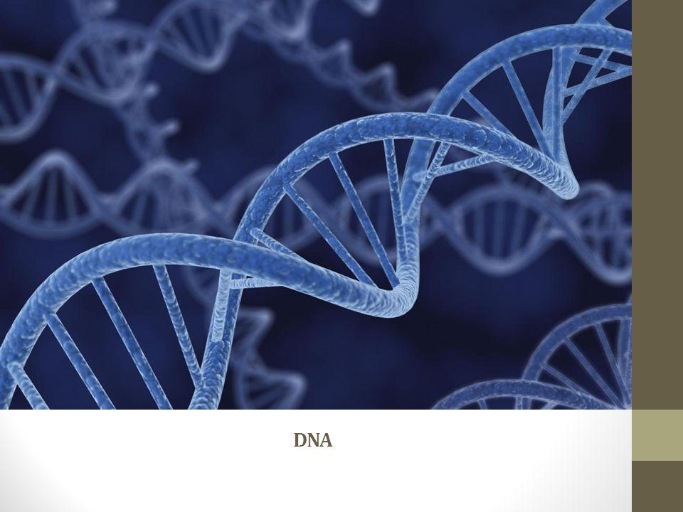 Kromozom mutasyonları Polyploidy