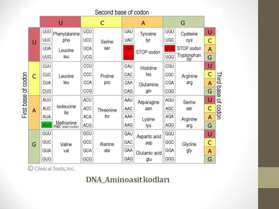 DNA_Aminoasit kodları