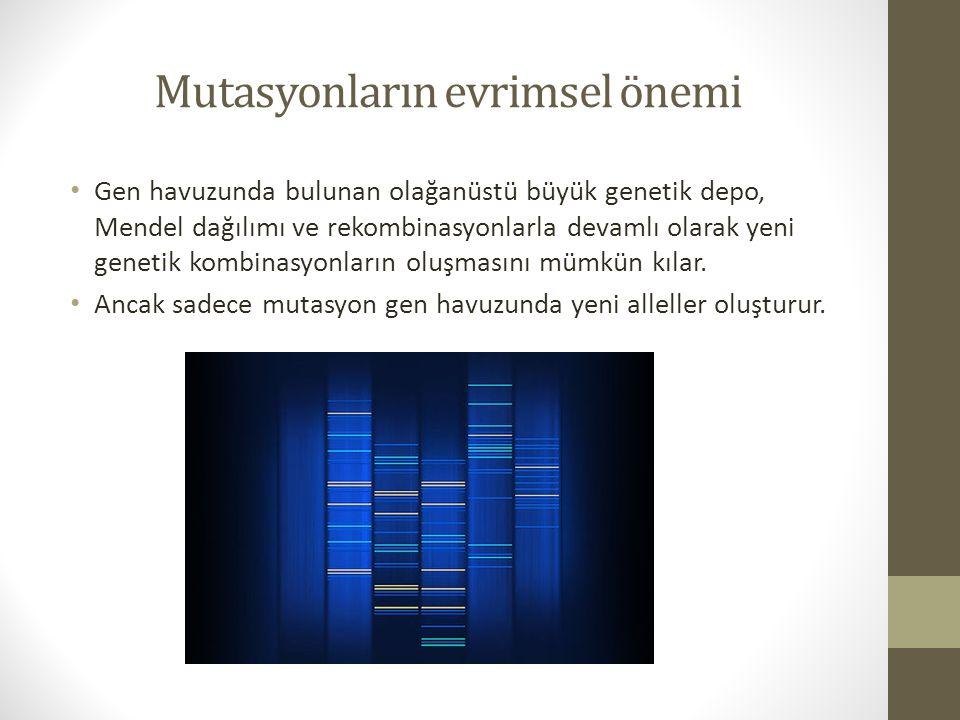 Mutasyonların evrimsel önemi Gen havuzunda bulunan olağanüstü büyük genetik depo, Mendel dağılımı ve rekombinasyonlarla devamlı olarak yeni genetik ko