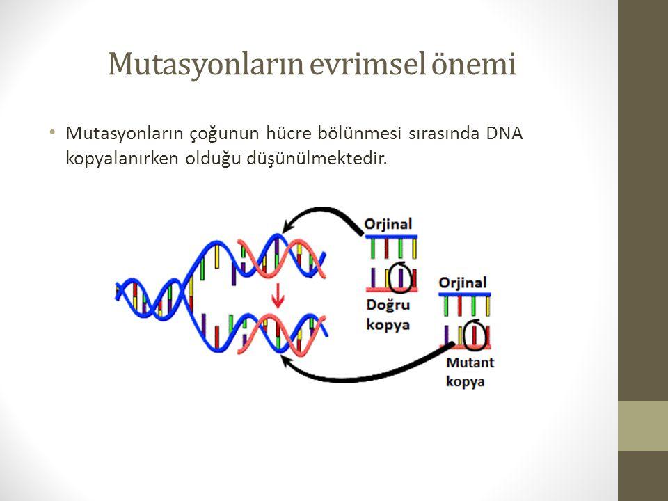 Gen mutasyonu sıklıkları Örneğin Başlangıçta populasyondaki sıklığı 1.0 olan A allelinin mutant a alleline karşı sıklığının 0.5 değerine düşmesi için yaklaşık 70.000 kuşak geçmesi gerekmektedir.