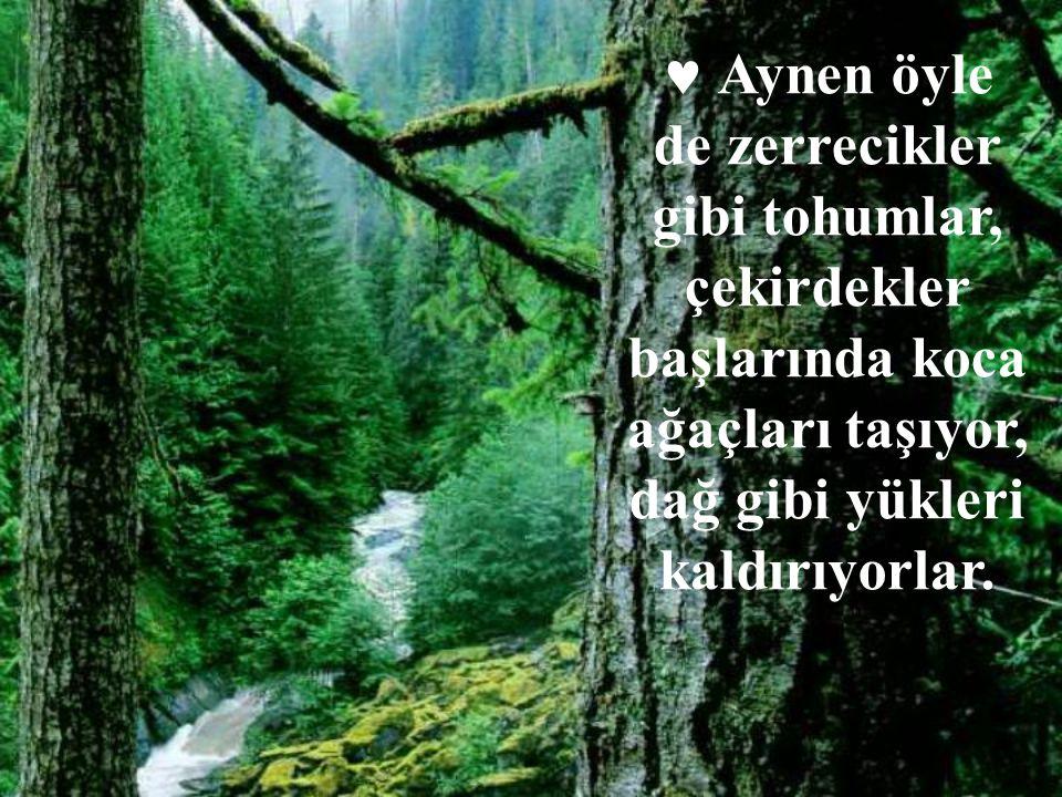 Aynen öyle de zerrecikler gibi tohumlar, çekirdekler başlarında koca ağaçları taşıyor, dağ gibi yükleri kaldırıyorlar.