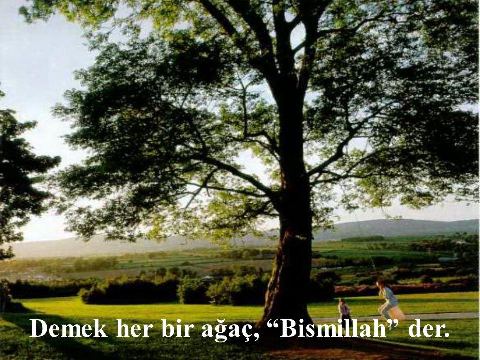 """Demek her bir ağaç, """"Bismillah"""" der."""