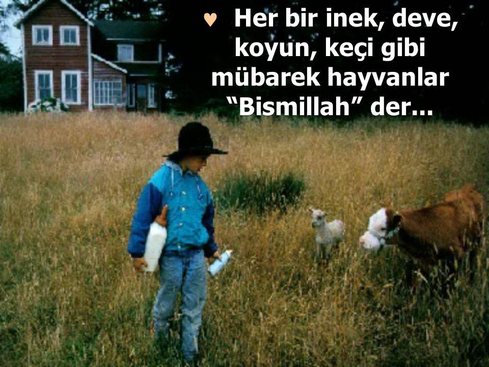 """Her bir inek, deve, koyun, keçi gibi mübarek hayvanlar """"Bismillah"""" der..."""