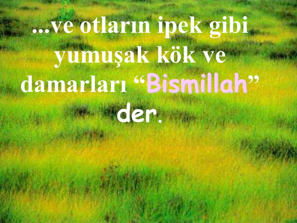 """...ve otların ipek gibi yumuşak kök ve damarları Bismillah """" Bismillah """" der."""