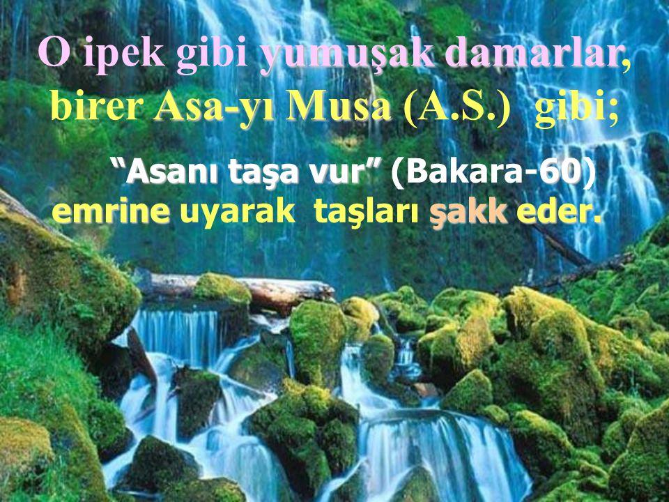 """O ipek gibi yumuşak damarlar damarlar, birer Asa-yı Musa Musa (A.S.) gibi; """"Asanı taşa vur"""" (Bakara-60) emrine uyarak taşları ş şş şakk eder."""