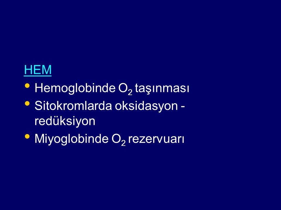 HEM Hemoglobinde O 2 taşınması Sitokromlarda oksidasyon - redüksiyon Miyoglobinde O 2 rezervuarı