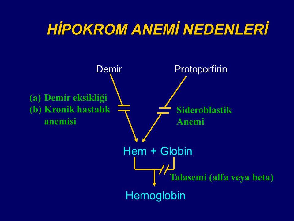 DemirProtoporfirin Hem + Globin Sideroblastik Anemi (a)Demir eksikliği (b)Kronik hastalık anemisi Hemoglobin Talasemi (alfa veya beta) HİPOKROM ANEMİ