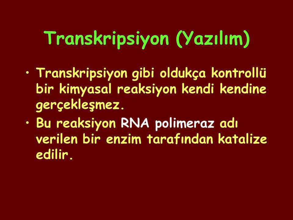 Transkripsiyon (Yazılım) Transkripsiyon gibi oldukça kontrollü bir kimyasal reaksiyon kendi kendine gerçekleşmez. Bu reaksiyon RNA polimeraz adı veril