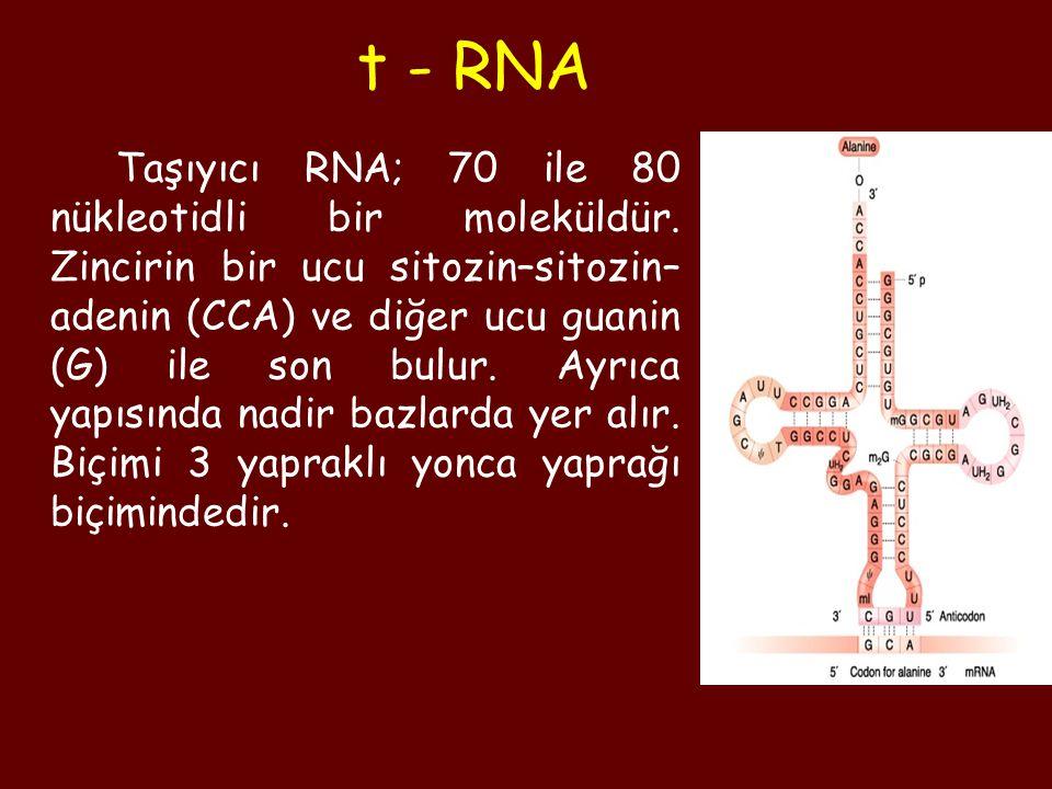 Taşıyıcı RNA; 70 ile 80 nükleotidli bir moleküldür. Zincirin bir ucu sitozin–sitozin– adenin (CCA) ve diğer ucu guanin (G) ile son bulur. Ayrıca yapıs