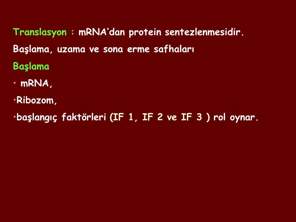 Translasyon : mRNA'dan protein sentezlenmesidir. Başlama, uzama ve sona erme safhaları Başlama mRNA, Ribozom, başlangıç faktörleri (IF 1, IF 2 ve IF 3