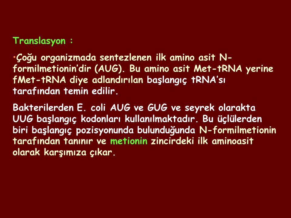 Translasyon : Çoğu organizmada sentezlenen ilk amino asit N- formilmetionin'dir (AUG). Bu amino asit Met-tRNA yerine fMet-tRNA diye adlandırılan başla