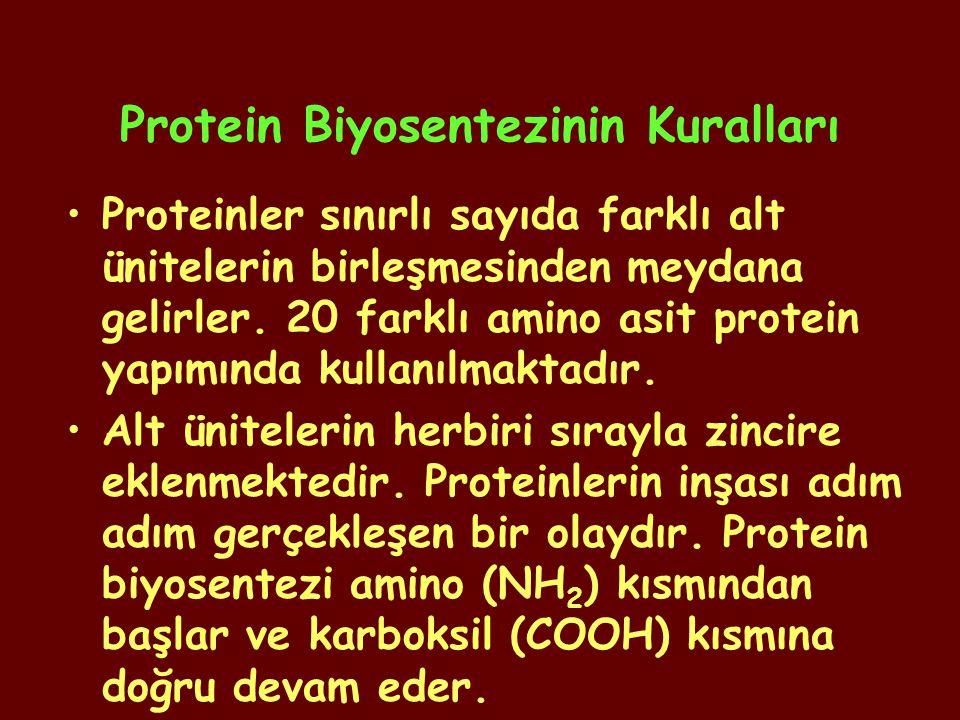 Protein Biyosentezinin Kuralları Proteinler sınırlı sayıda farklı alt ünitelerin birleşmesinden meydana gelirler. 20 farklı amino asit protein yapımın
