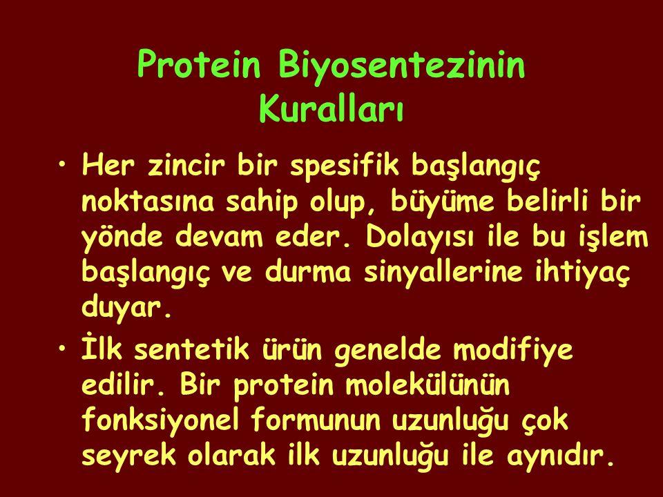 Protein Biyosentezinin Kuralları Her zincir bir spesifik başlangıç noktasına sahip olup, büyüme belirli bir yönde devam eder. Dolayısı ile bu işlem ba