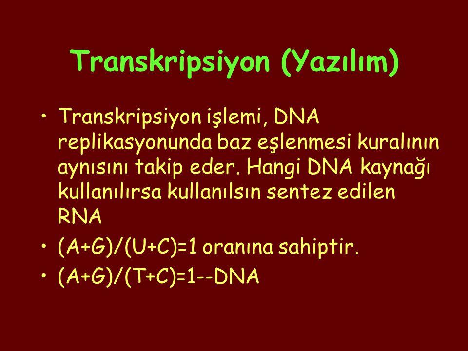 Translasyon : mRNA'dan protein sentezlenmesidir.