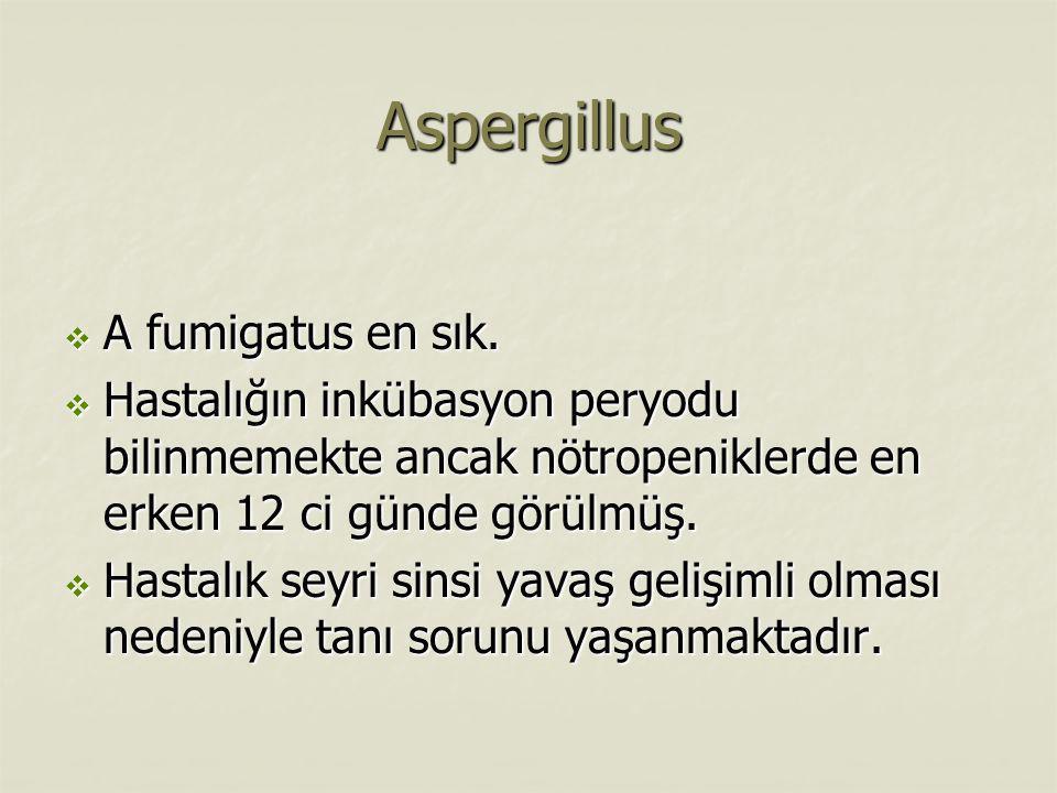 Aspergillus  A fumigatus en sık.  Hastalığın inkübasyon peryodu bilinmemekte ancak nötropeniklerde en erken 12 ci günde görülmüş.  Hastalık seyri s