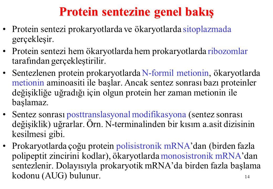 14 Protein sentezi prokaryotlarda ve ökaryotlarda sitoplazmada gerçekleşir. Protein sentezi hem ökaryotlarda hem prokaryotlarda ribozomlar tarafından