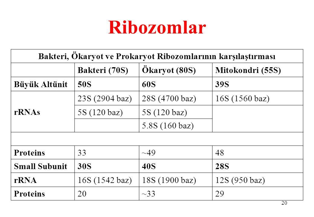 20 Ribozomlar Bakteri, Ökaryot ve Prokaryot Ribozomlarının karşılaştırması Bakteri (70S)Ökaryot (80S)Mitokondri (55S) Büyük Altünit50S60S39S rRNAs 23S