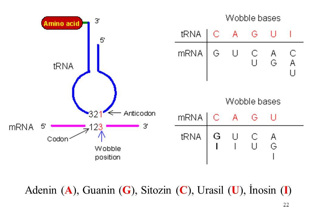 22 Adenin (A), Guanin (G), Sitozin (C), Urasil (U), İnosin (I)