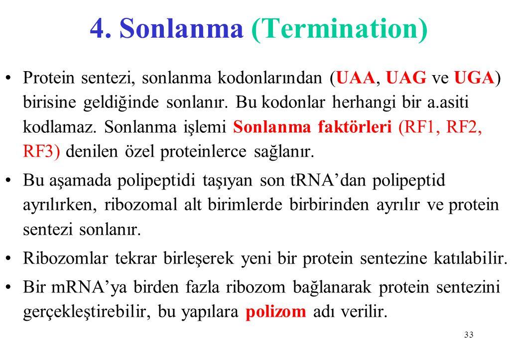 33 4. Sonlanma (Termination) Protein sentezi, sonlanma kodonlarından (UAA, UAG ve UGA) birisine geldiğinde sonlanır. Bu kodonlar herhangi bir a.asiti
