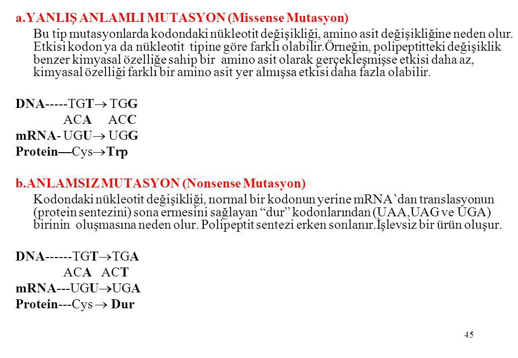 45 a.YANLIŞ ANLAMLI MUTASYON (Missense Mutasyon) Bu tip mutasyonlarda kodondaki nükleotit değişikliği, amino asit değişikliğine neden olur. Etkisi kod