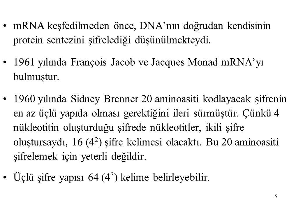 6 Aminoasitlere özgü üçlü özgül dizilerin saptanması ile 2 sonuç ortaya çıkmıştır; 1- Genetik şifre dejerenedir.