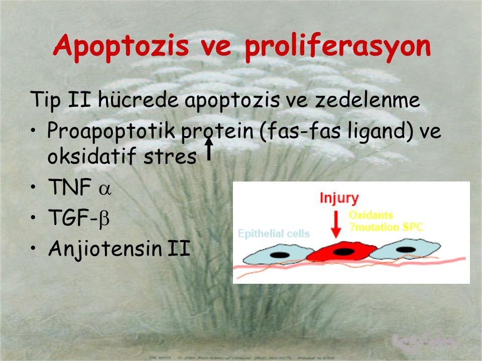 Apoptozis ve proliferasyon Tip II hücrede apoptozis ve zedelenme Proapoptotik protein (fas-fas ligand) ve oksidatif stres TNF  TGF-  Anjiotensin II