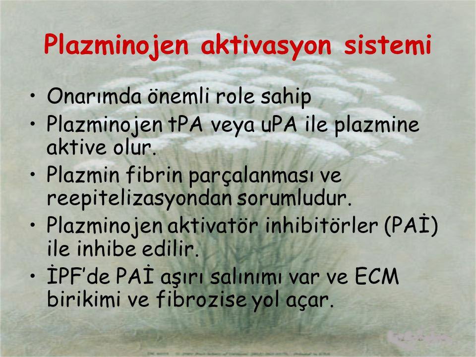 Plazminojen aktivasyon sistemi Onarımda önemli role sahip Plazminojen tPA veya uPA ile plazmine aktive olur. Plazmin fibrin parçalanması ve reepiteliz