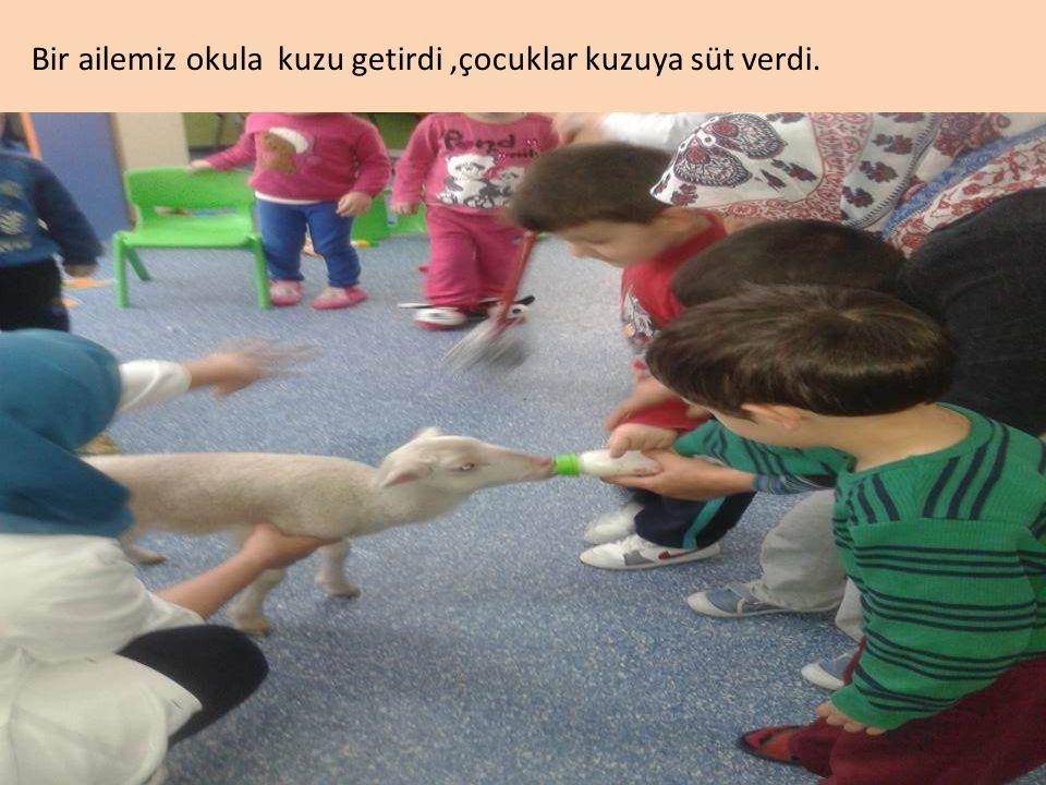 Bir ailemiz okula kuzu getirdi,çocuklar kuzuya süt verdi.