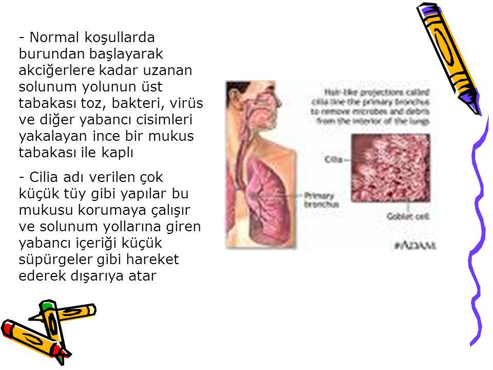 - Normal koşullarda burundan başlayarak akciğerlere kadar uzanan solunum yolunun üst tabakası toz, bakteri, virüs ve diğer yabancı cisimleri yakalayan