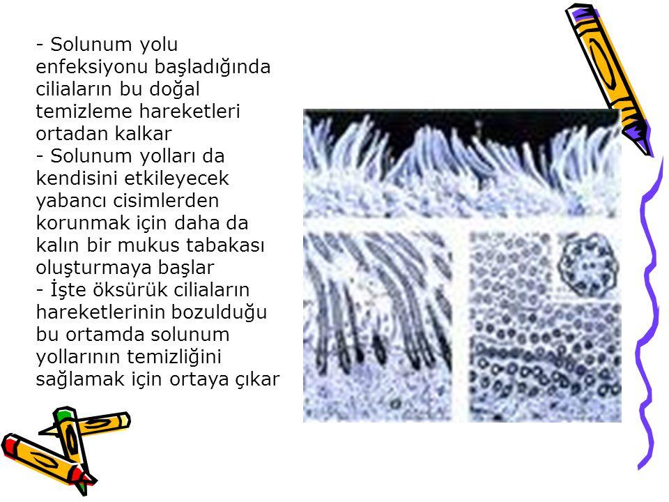 - Solunum yolu enfeksiyonu başladığında ciliaların bu doğal temizleme hareketleri ortadan kalkar - Solunum yolları da kendisini etkileyecek yabancı ci