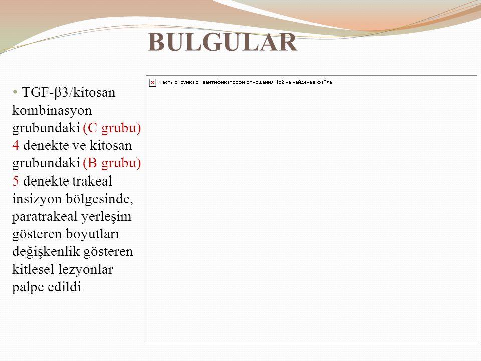 BULGULAR TGF-β3/kitosan kombinasyon grubundaki (C grubu) 4 denekte ve kitosan grubundaki (B grubu) 5 denekte trakeal insizyon bölgesinde, paratrakeal