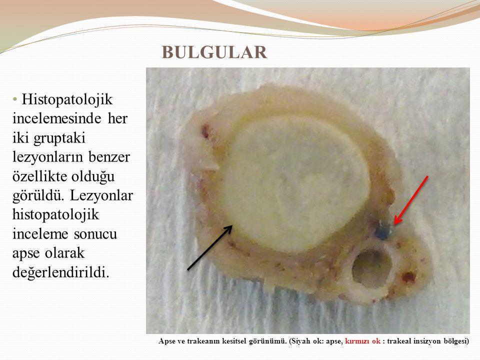 BULGULAR Histopatolojik incelemesinde her iki gruptaki lezyonların benzer özellikte olduğu görüldü. Lezyonlar histopatolojik inceleme sonucu apse olar