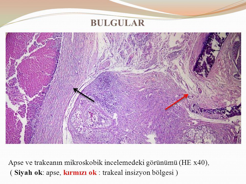 BULGULAR Apse ve trakeanın mikroskobik incelemedeki görünümü (HE x40), ( Siyah ok: apse, kırmızı ok : trakeal insizyon bölgesi )