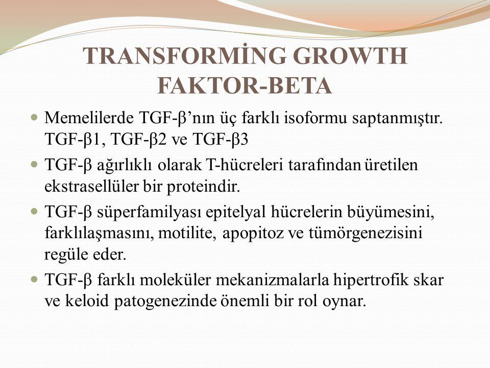 TRANSFORMİNG GROWTH FAKTOR-BETA Memelilerde TGF-β'nın üç farklı isoformu saptanmıştır. TGF-β1, TGF-β2 ve TGF-β3 TGF-β ağırlıklı olarak T-hücreleri tar