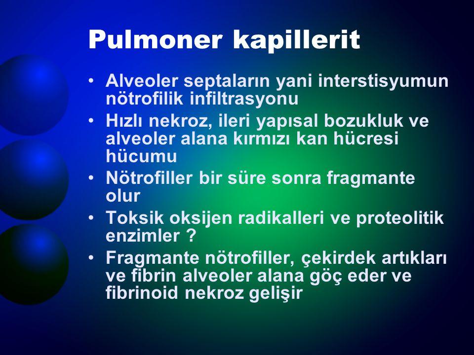 Pulmoner kapillerit Alveoler septaların yani interstisyumun nötrofilik infiltrasyonu Hızlı nekroz, ileri yapısal bozukluk ve alveoler alana kırmızı ka