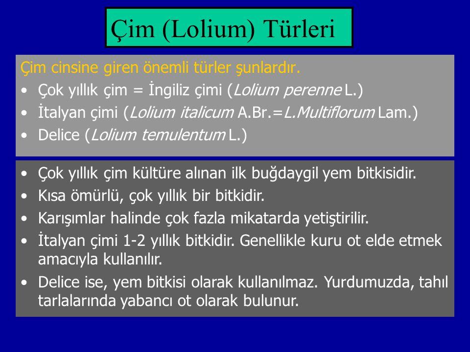Çim (Lolium) Türleri Çim cinsine giren önemli türler şunlardır. Çok yıllık çim = İngiliz çimi (Lolium perenne L.) İtalyan çimi (Lolium italicum A.Br.=