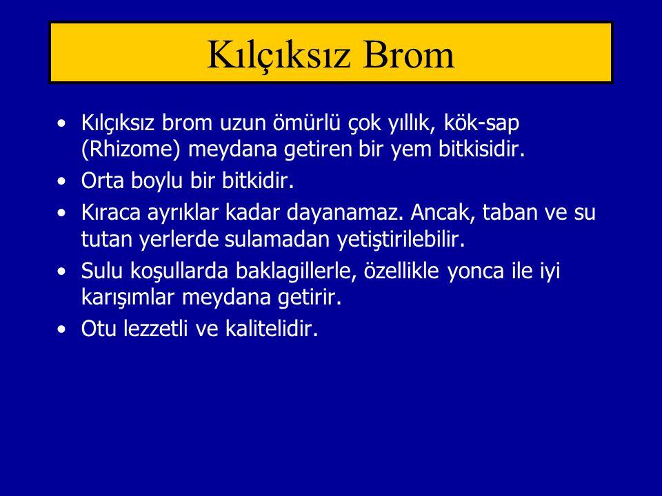 Kılçıksız Brom Kılçıksız brom uzun ömürlü çok yıllık, kök-sap (Rhizome) meydana getiren bir yem bitkisidir. Orta boylu bir bitkidir. Kıraca ayrıklar k