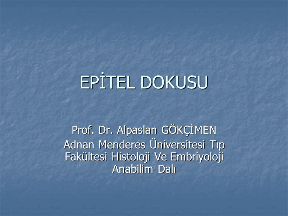 EPİTEL DOKUSU Prof. Dr. Alpaslan GÖKÇİMEN Adnan Menderes Üniversitesi Tıp Fakültesi Histoloji Ve Embriyoloji Anabilim Dalı