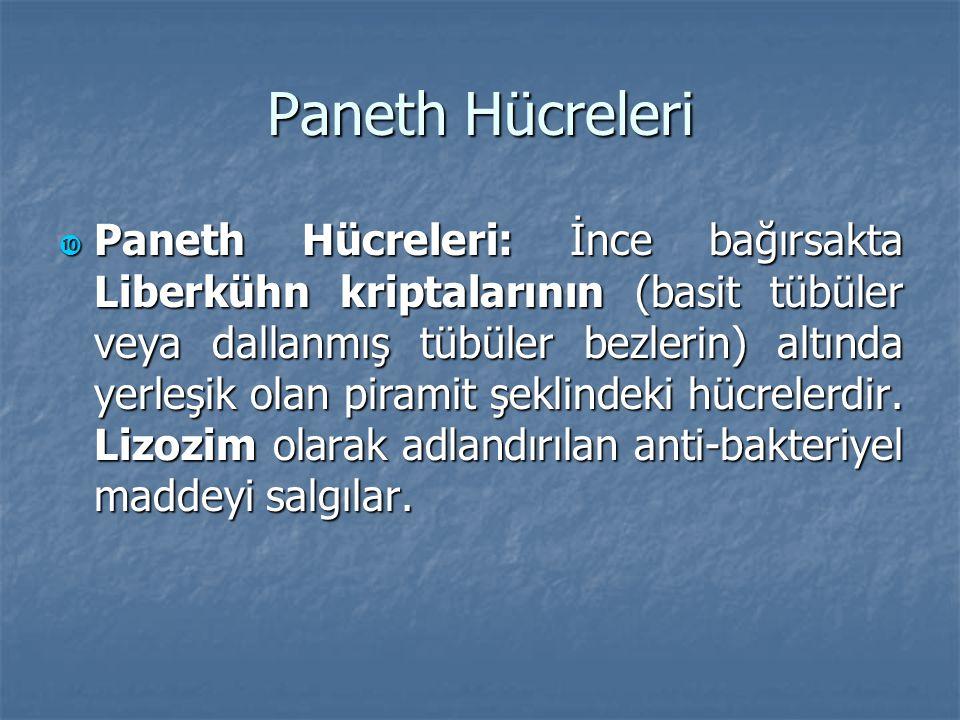 Paneth Hücreleri  Paneth Hücreleri: İnce bağırsakta Liberkühn kriptalarının (basit tübüler veya dallanmış tübüler bezlerin) altında yerleşik olan pir