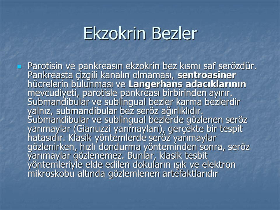 Ekzokrin Bezler Parotisin ve pankreasın ekzokrin bez kısmı saf serözdür. Pankreasta çizgili kanalın olmaması, sentroasiner hücrelerin bulunması ve Lan