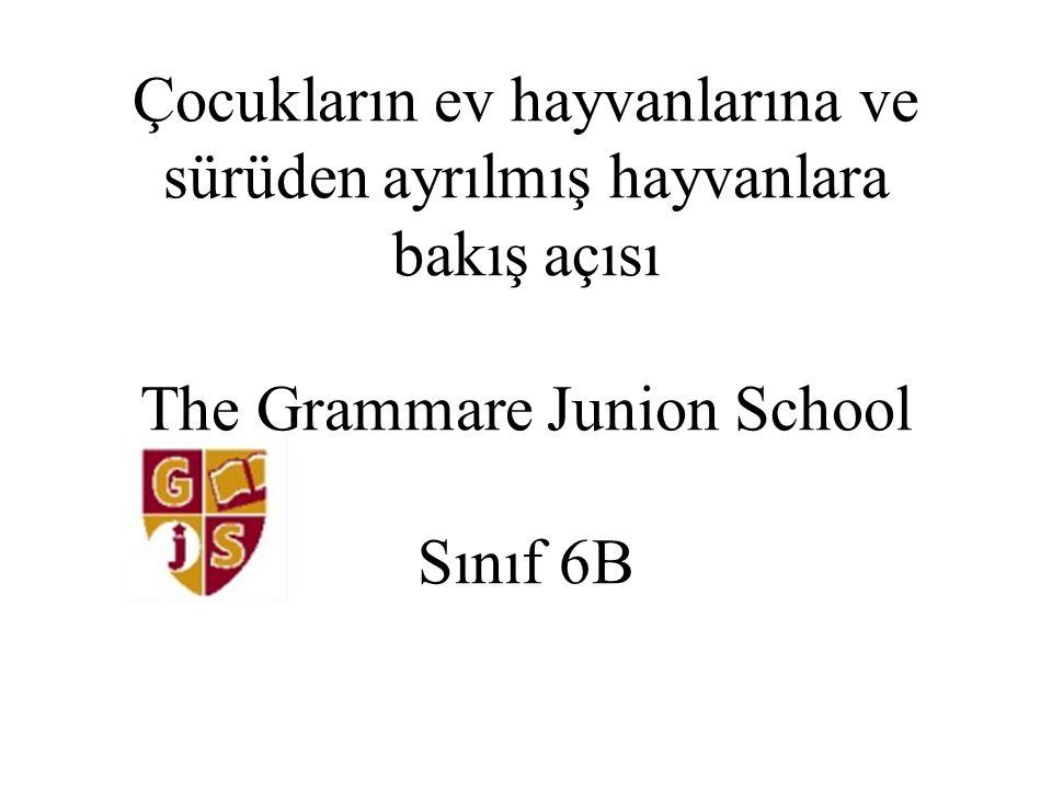 Çocukların ev hayvanlarına ve sürüden ayrılmış hayvanlara bakış açısı The Grammare Junion School Sınıf 6B
