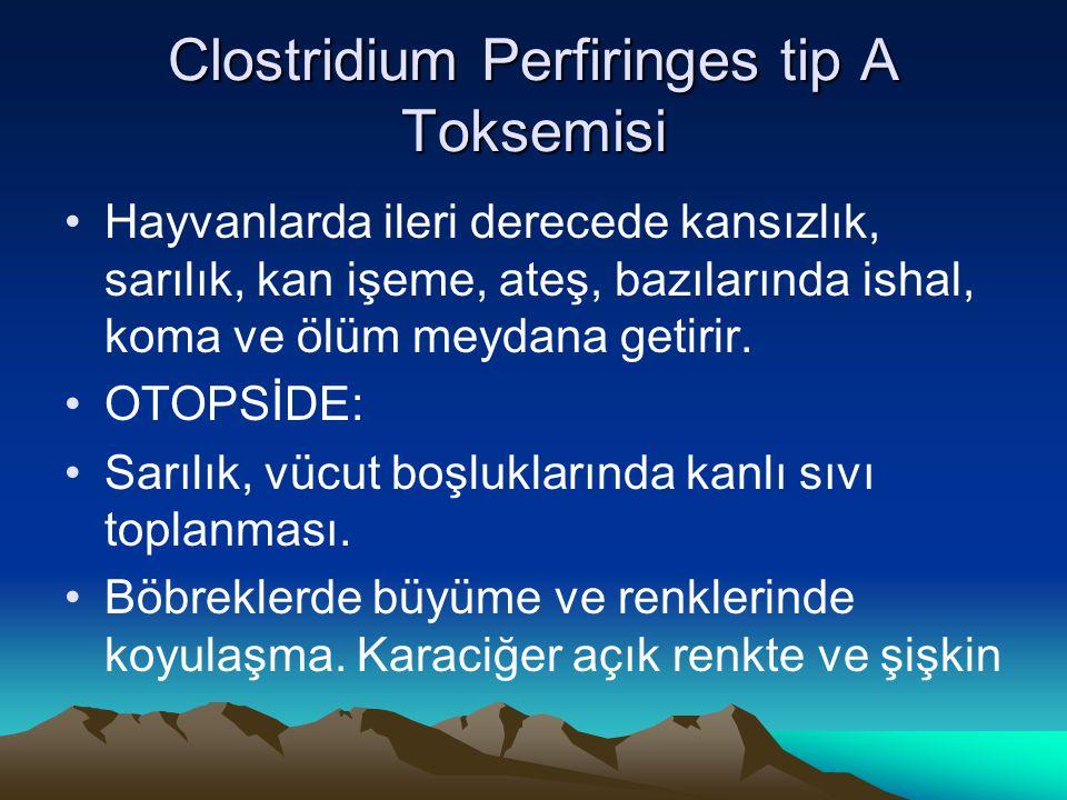 Clostridium Perfiringes tip A Toksemisi Hayvanlarda ileri derecede kansızlık, sarılık, kan işeme, ateş, bazılarında ishal, koma ve ölüm meydana getiri