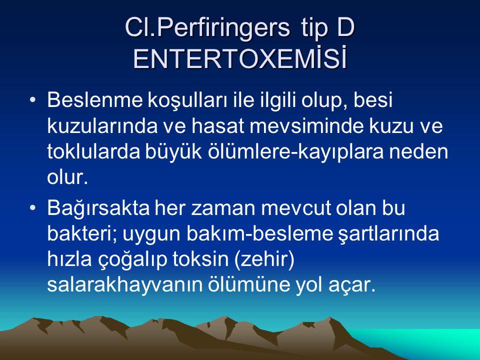 Cl.Perfiringers tip D ENTERTOXEMİSİ Beslenme koşulları ile ilgili olup, besi kuzularında ve hasat mevsiminde kuzu ve toklularda büyük ölümlere-kayıpla