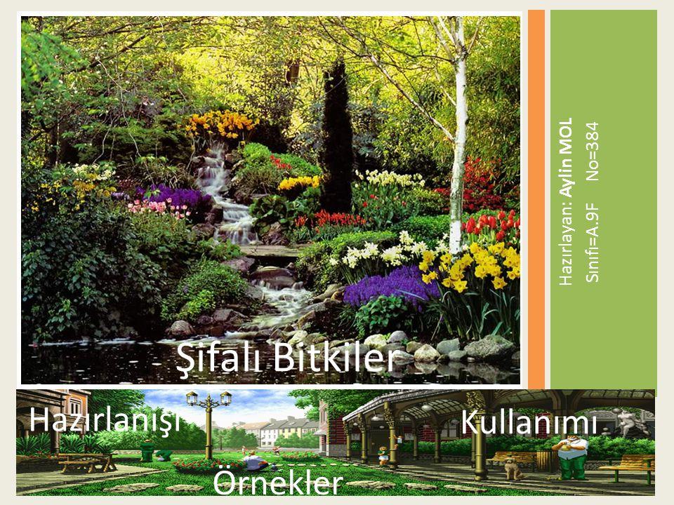  Ceviz Yaprağı Ceviz Ağacı (Junglans Regia), daha yapraklanmadan, Mayıs ta çiçeklenir.