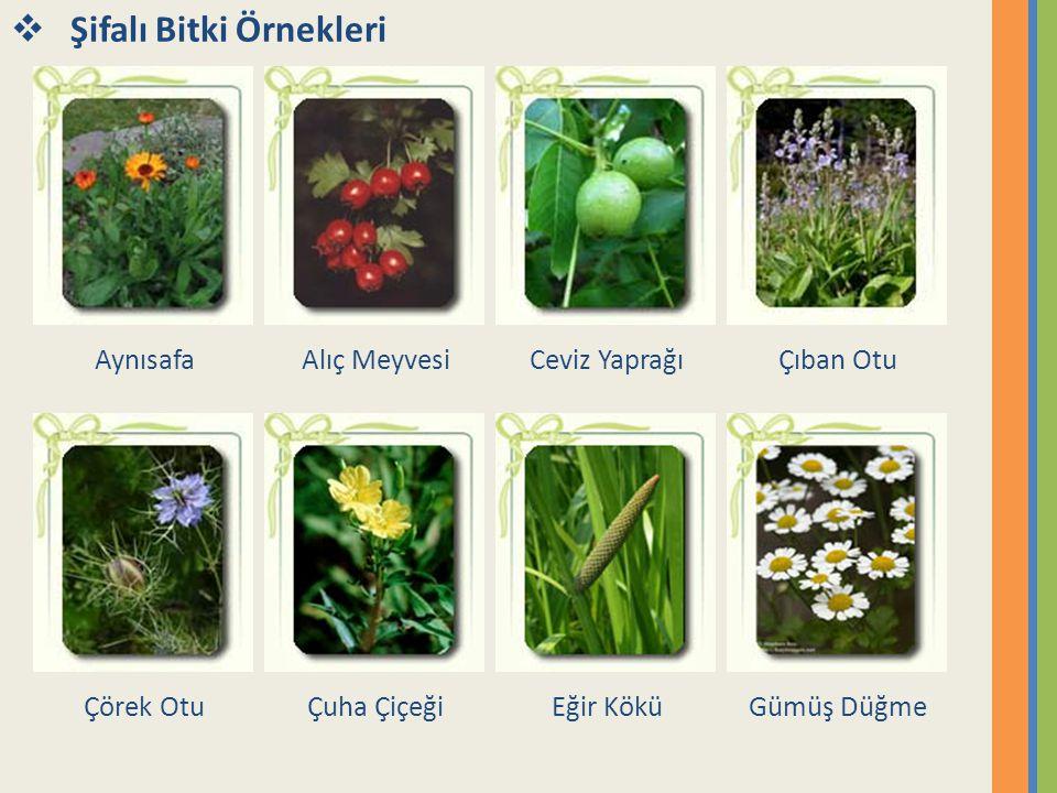  Aynısafa (Portakal Nergizi Aynısafa (Calendula officinalis), ülkemizde yetişen bitkiler arasında çok önemli bir yere sahiptir.