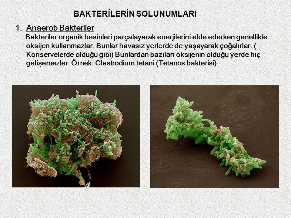 1.Anaerob Bakteriler Bakteriler organik besinleri parçalayarak enerjilerini elde ederken genellikle oksijen kullanmazlar. Bunlar havasız yerlerde de y