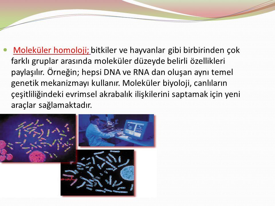 Moleküler homoloji; bitkiler ve hayvanlar gibi birbirinden çok farklı gruplar arasında moleküler düzeyde belirli özellikleri paylaşılır. Örneğin; heps