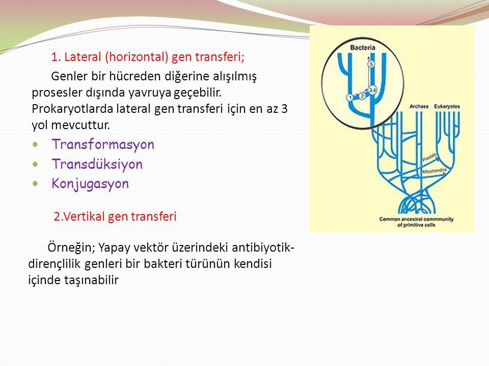 1. Lateral (horizontal) gen transferi; Genler bir hücreden diğerine alışılmış prosesler dışında yavruya geçebilir. Prokaryotlarda lateral gen transfer
