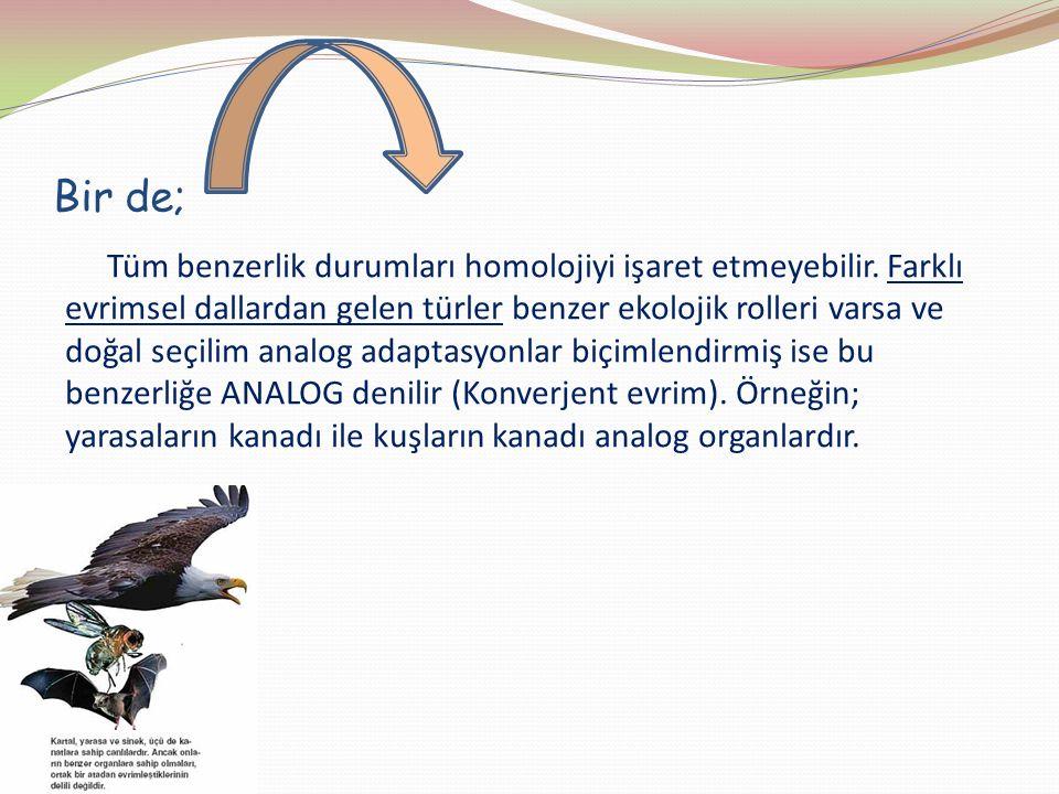 Bir de; Tüm benzerlik durumları homolojiyi işaret etmeyebilir. Farklı evrimsel dallardan gelen türler benzer ekolojik rolleri varsa ve doğal seçilim a